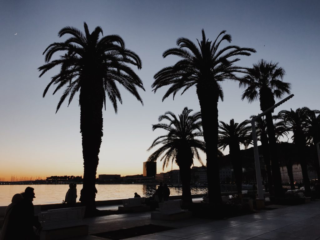 Sunset palm trees during summer in Croatia