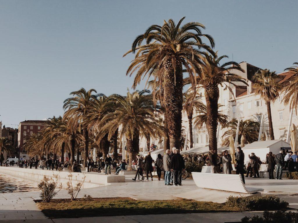Riva Split Palm trees