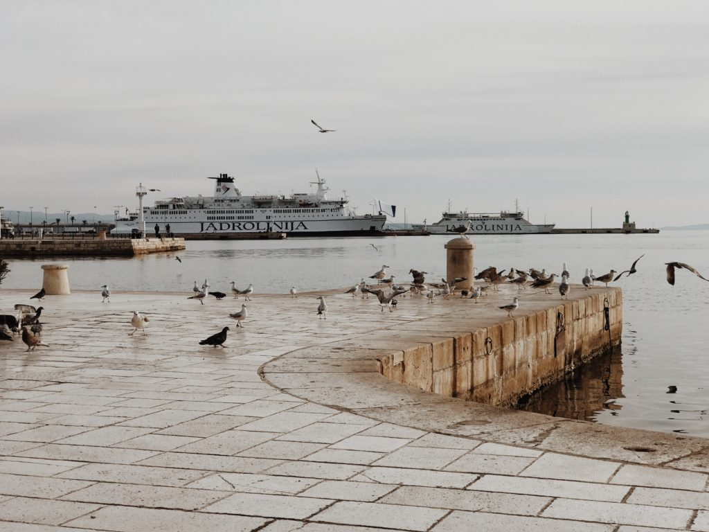 A seagull on the quay of the port