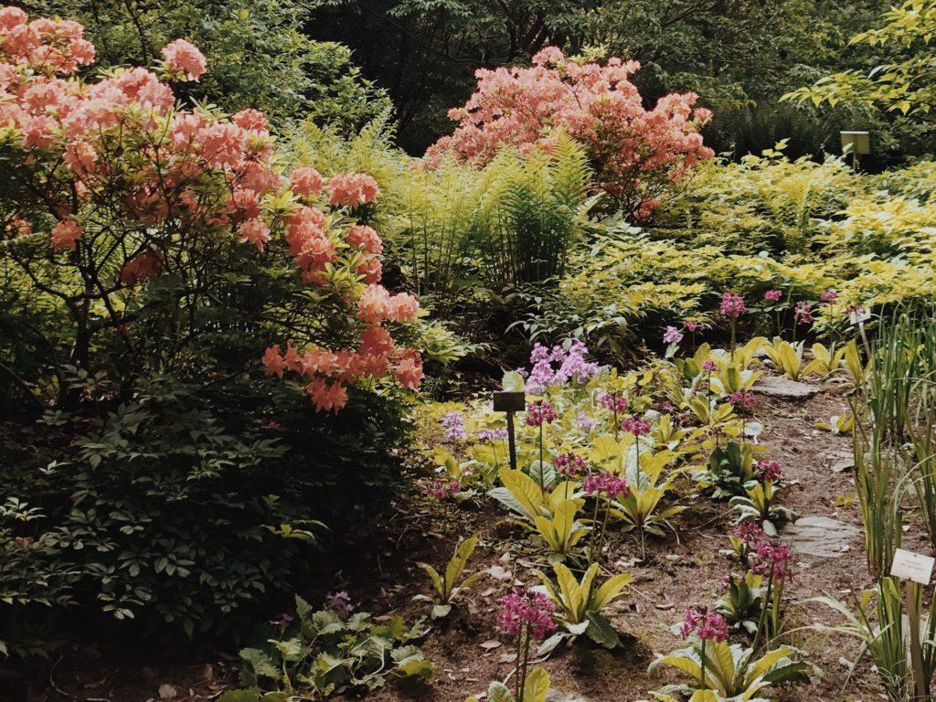 Botanical Garden Berlin flowers