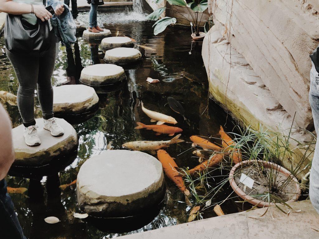 Botanical Garden Berlin fish
