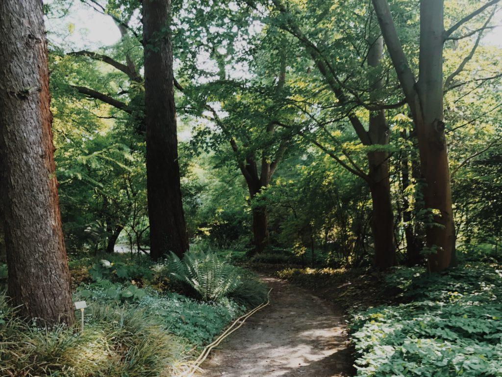 Botanical Garden Berlin forest