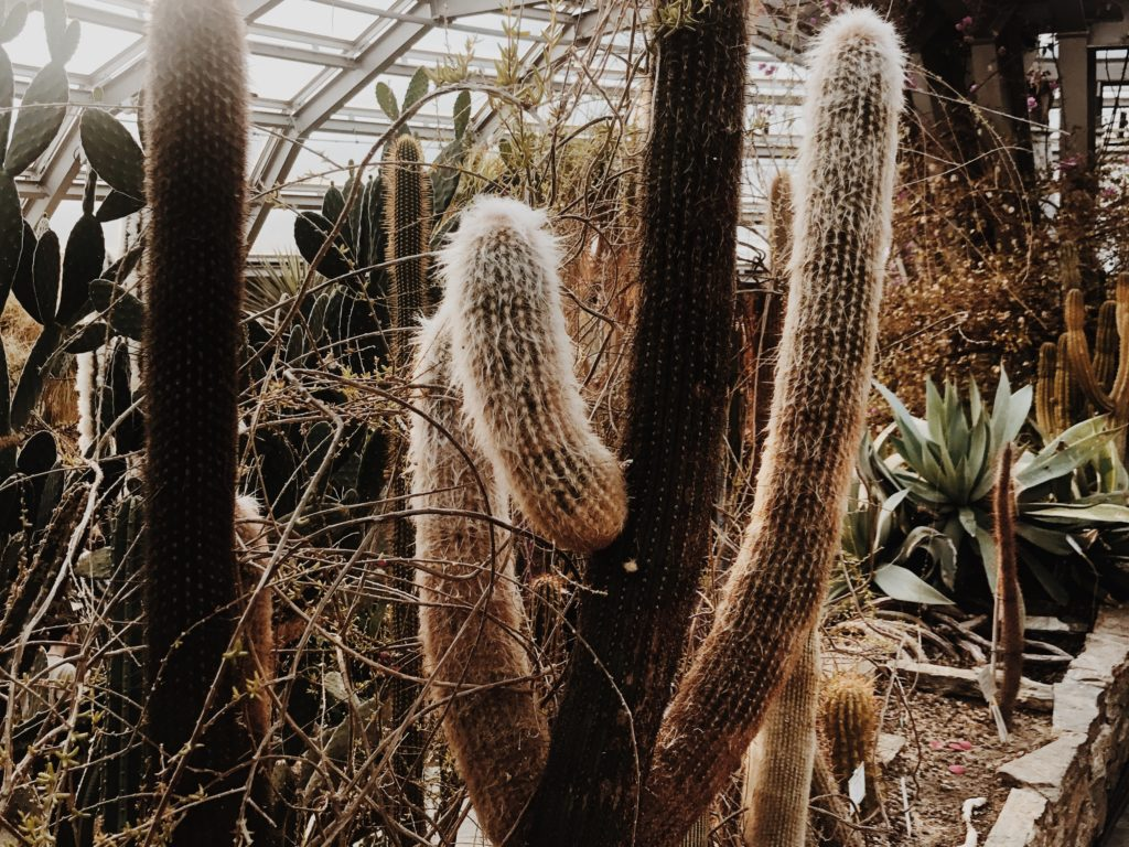 Variety of cacti displayed in the greenhouse